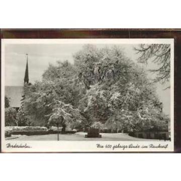 41387962 Bordesholm 600 jaehrige Linde im Schnee Bordesholm